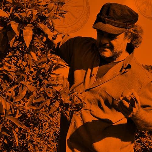 La terra giusta: gli agrumi ostaggio della 'ndrangheta e del mercato