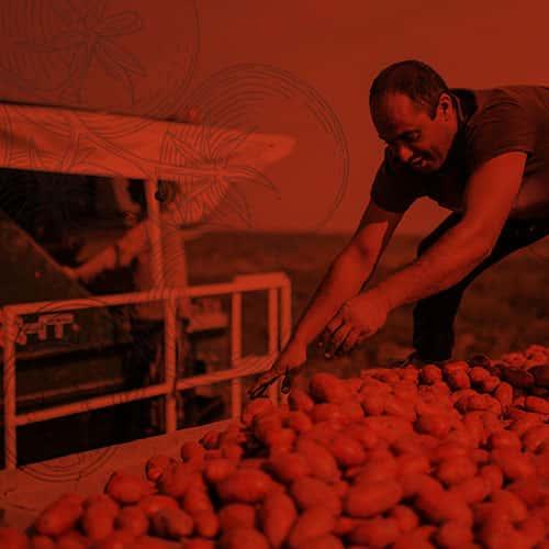 La terra giusta: il prezzo del pomodoro