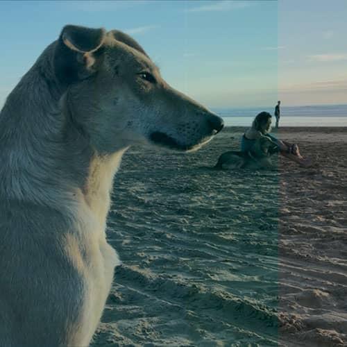 Taghazout, storie di umani e cani